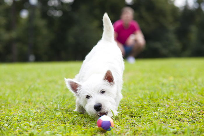 Why Dogs Make Us Healthy